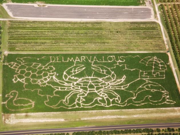 2013 fifer's corn maze